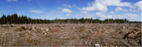 FortMcMurray_Forest